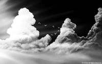 「モノクロの世界」04「夏の雲と渡り鳥」
