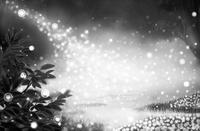 「モノクロの世界」02「光の森」